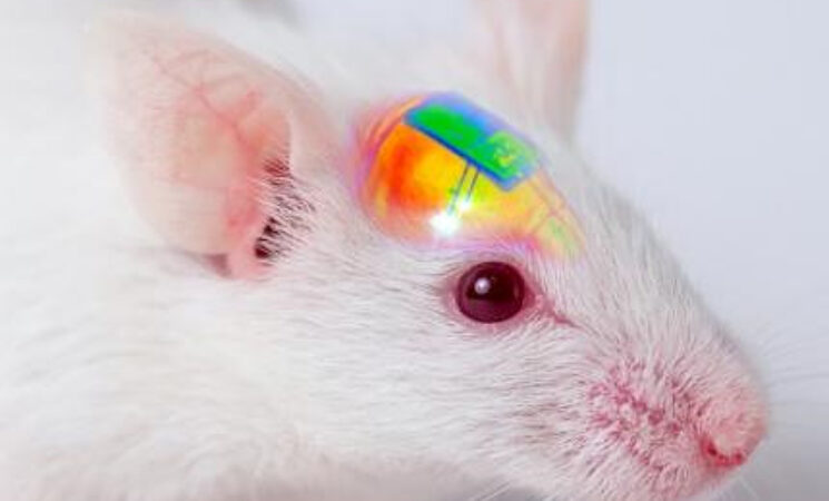 Wirelessly Rechargeable Soft Brain Implant Controls Brain Cells