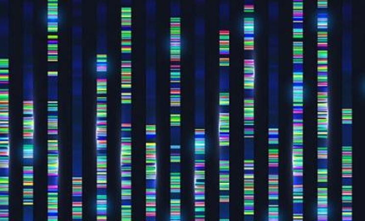 Genomic Data Reveals New Insights into Human Embryonic Development